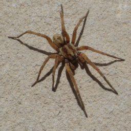 Уничтожение пауков в Люберцах